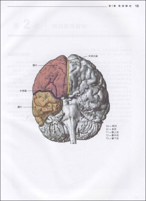 颅脑放射影像解剖图谱