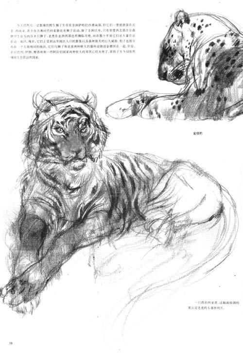 怎样画动物素描 马克.安布鲁斯
