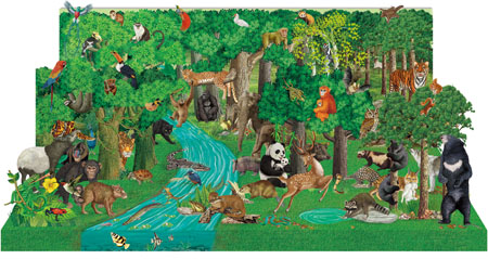 中国儿童立体百科全书:热闹的森林