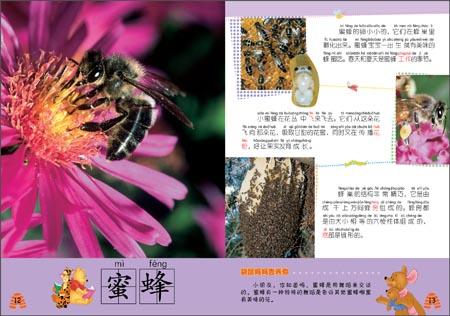动物百科:昆虫与蜘蛛》是一套适合幼儿认知汉字的