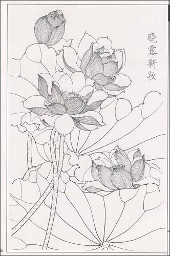 中国名花工笔线描画谱 荷花