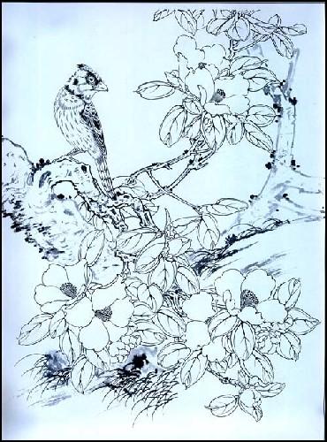 月季茶花白描画稿:亚马逊:图书