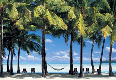 蓝天白云的海滩上,和茂密的椰子树,最引人向往的度假圣地!