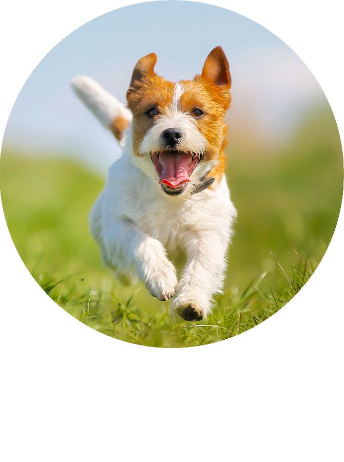 狗狗图片卡通过年