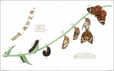 美丽成长科普绘本系列:蝴蝶,如此耐心精装–2012年5月31日